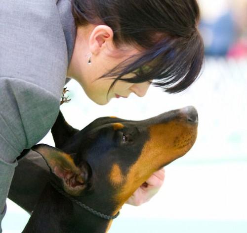 Doberman Pinschers Jan 14 2012 Winnegamie Dog Club